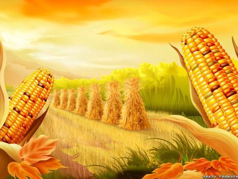 Thanks Giving Corn Wallpaper